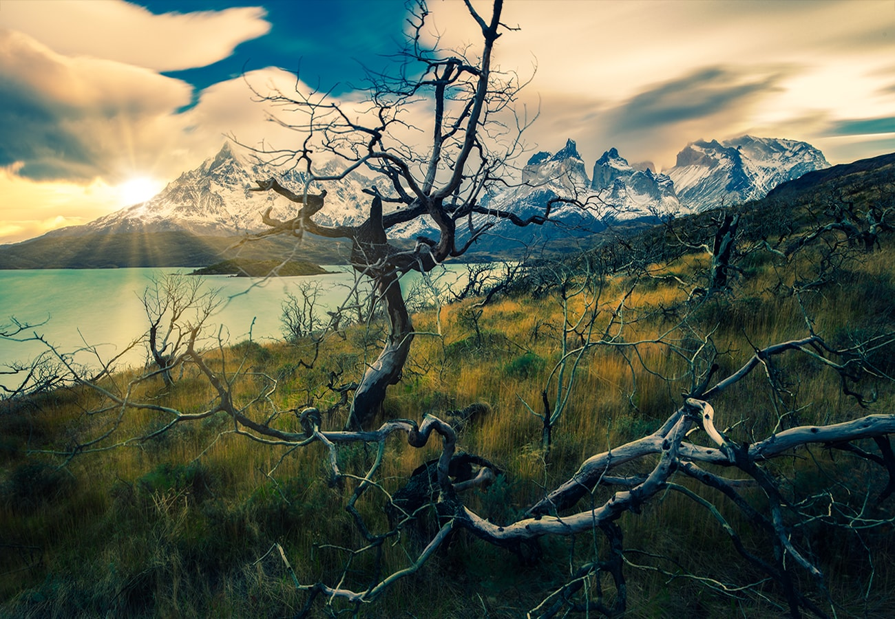 the dead trees in torres del paine national park